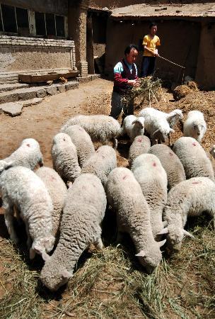 图文:[农业经济](2)内蒙古千村扶贫见成效