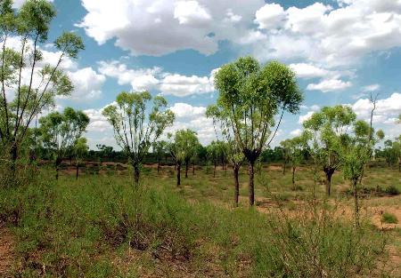榆林国家沙漠森林公园