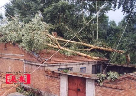 内蒙古扎兰屯遭10级以上大风袭击56人受伤(图)