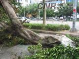 海南受台风龙卷风袭击损失近百亿死亡13人(图)