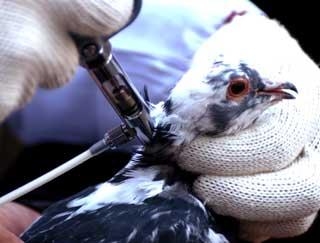 国务院常务会议部署防控禽流感