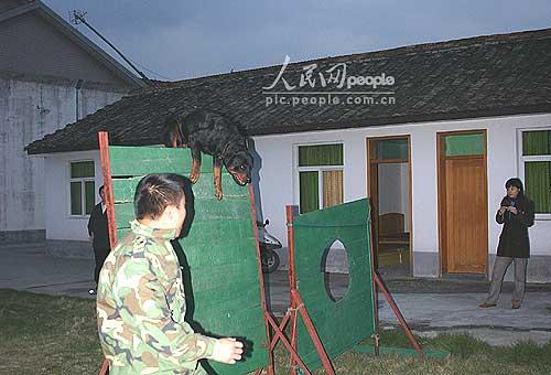 组图:绍兴县警犬基地