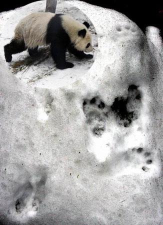 雪地动物脚印像什么花