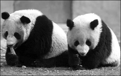 探访台北动物园熊猫馆:盼熊猫落户争挂巨幅广告