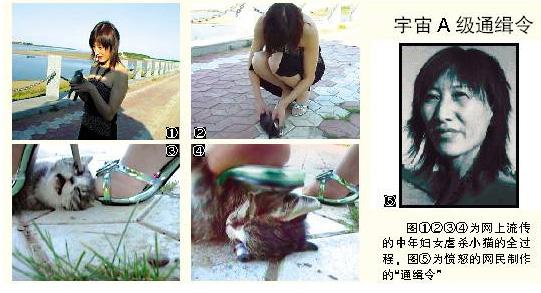 新闻中心 国内新闻 > 正文       残忍杀猫场景由一组图片组成.