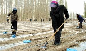 国家林业局启动应急预案备战沙尘暴