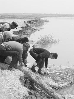 黄河塌岸宁夏灾民多次求助政府无回应转求河神