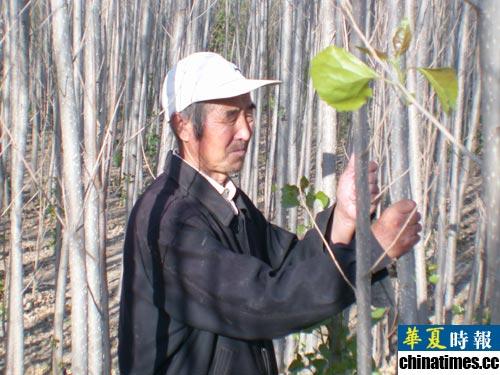 北京沙尘暴源头林地遭砍续:当地称林场效益低