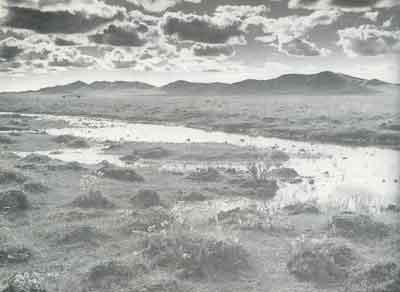 红军走过的水草地(图)