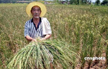 四川重庆西藏等12省区干旱持续发展