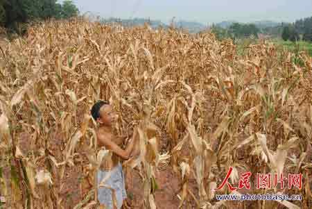 四川重庆新疆等地今日最高气温可达42℃