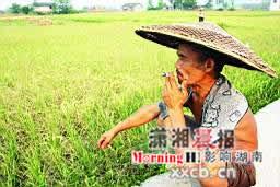 湖南张家界遭遇大旱近40万人饮水困难(图)