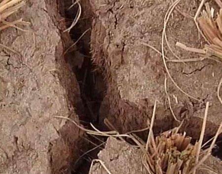 四川遭受50年不遇旱灾农作物在劫难逃