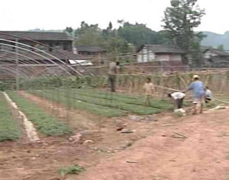 四川旱灾农业损失严重粮食减产五百万吨