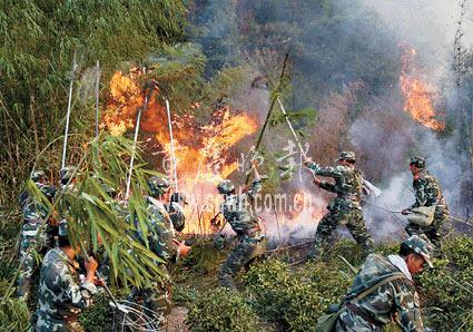 重庆北碚森林大火突破4条隔离带持续蔓延