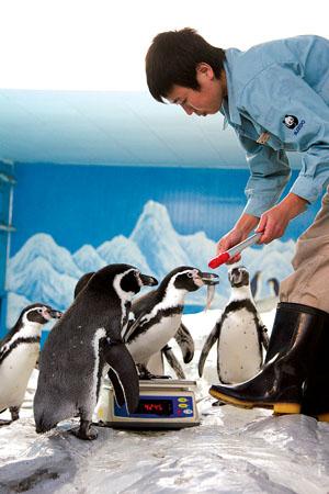 洗衣液瓶子做动物企鹅