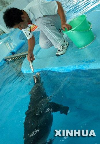 南宁动物园的饲养员在给海豚喂食