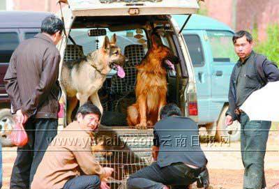 昆明市民热议狗患警方举报电话公布首日被打爆