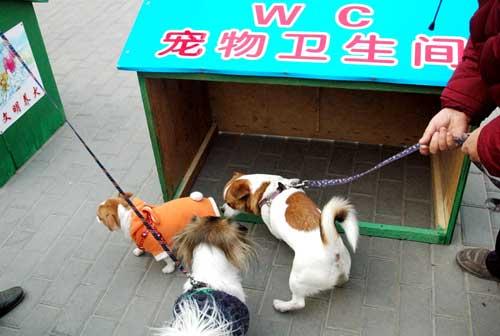 宠物wc(图)