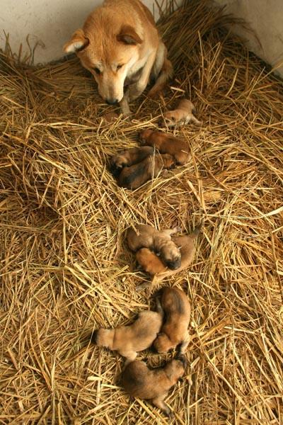 狗妈一胎生下11个宝