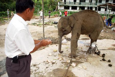 图文:两岁亚洲象成功获救(3)
