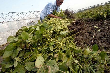图文:麦莎过后蔬菜基地遭殃