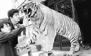 外国元首所赠国家级礼品亮相自然博物馆(图)