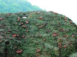 杭州宝石山碧玉在远古火山爆发时已成碎片