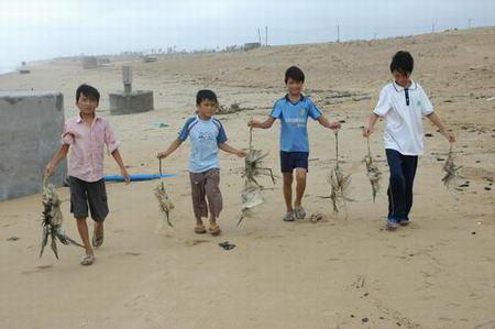 台风达维造成生态灾难登陆海域大量海鸟死亡