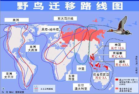 图表:关注禽流感-野鸟迁移路线图