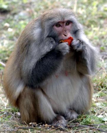 图文:〔社会〕(1)林芝地区野生动物增多