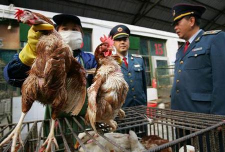 图文:北京市工商局检疫活禽市场