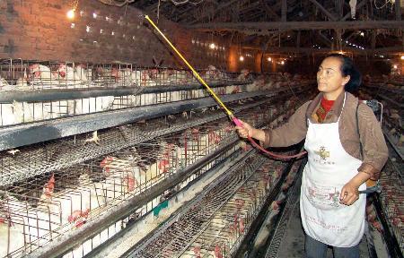 图文:养殖户在给鸡舍消毒