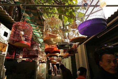 图文:北京官园花鸟鱼虫市场停止观赏鸟交易