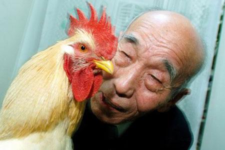 图文:老人的宠物鸡被扑杀