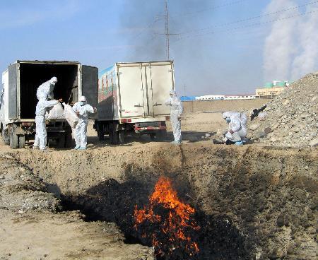 图文:新疆泽普县工作人员焚烧被扑杀的家禽