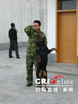 图文:警犬训练表演