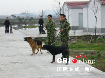 图文:数名警察手牵警犬