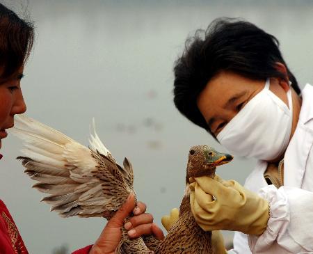 图文:山东沂河注射禽流感疫苗