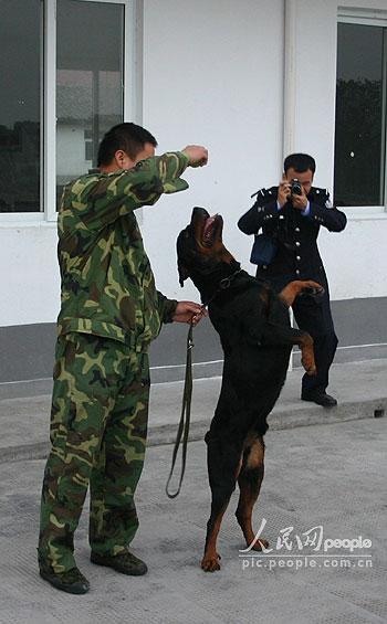 组图:记者参观绍兴县警犬基地