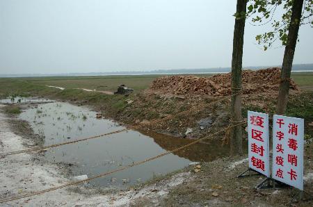 图文:湖北石首禽流感疫情发生点已被封锁