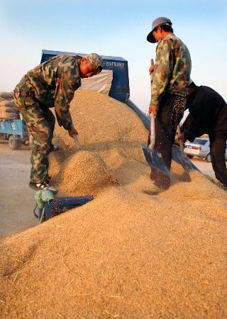 图文:宁夏吴忠成为西北最大粮食加工集散地(2)