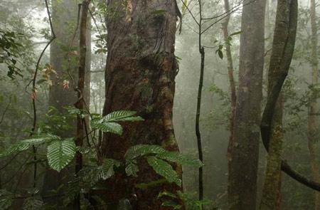 海南岛热带雨林_组图:海南岛热带雨林探奇观_新闻中心_新浪网