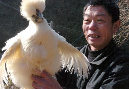图文:广东南雄养殖专业户观察乌鸡的情况