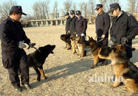 组图:藏獒将成为我国警犬备用犬种