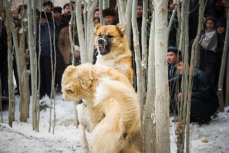 组图:美丽的冬日南疆