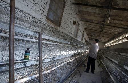 图文:山西阳泉养鸡户在对鸡棚进行消毒处理