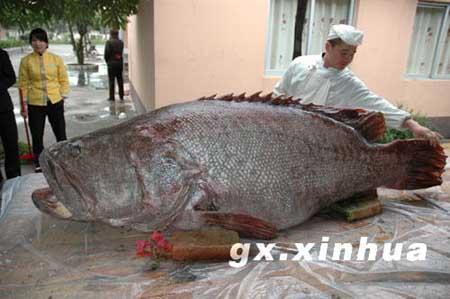 鱼内部结构解剖