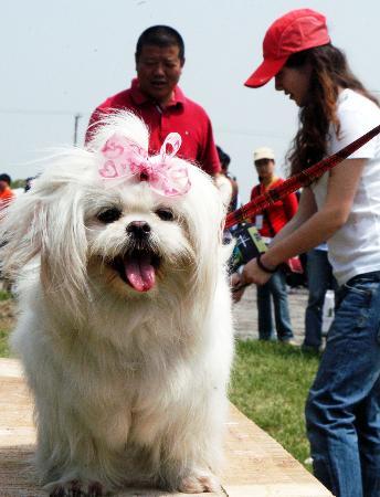 别开生面的宠物障碍赛,宠物服装秀等活动吸引了许多游人.