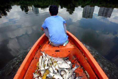 图文:活鱼被污水呛死(自然及环保新闻优秀奖单幅)